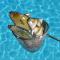 Eco Fishing - Pesca ecológica