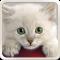 Cat HD Wallpapers Cute 2018 - Cool Cat Wallpaper